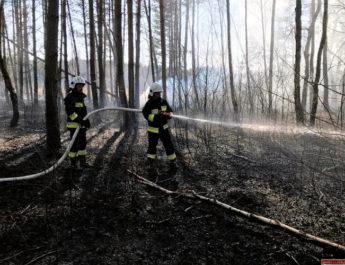 Strażacy gasili pierwsze pożary traw i poszycia leśnego. Apelują do mieszkańców o ostrożność i rozwagę